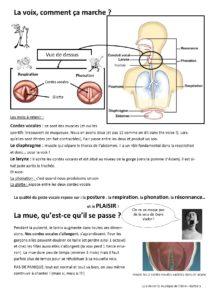 la-voix-physiologie